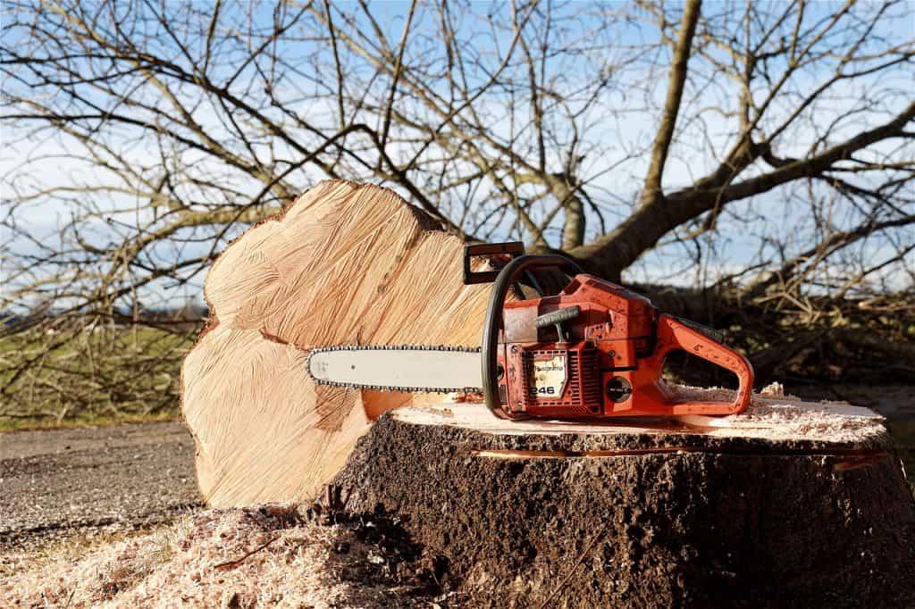 Coupe d'un arbre